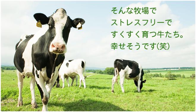 ストレスフリーで幸せな牛
